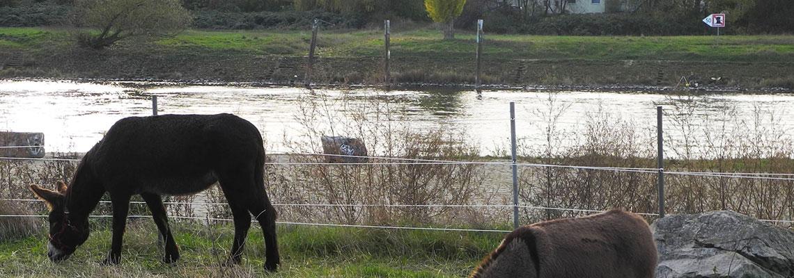 Hochwasserschutz Elbe